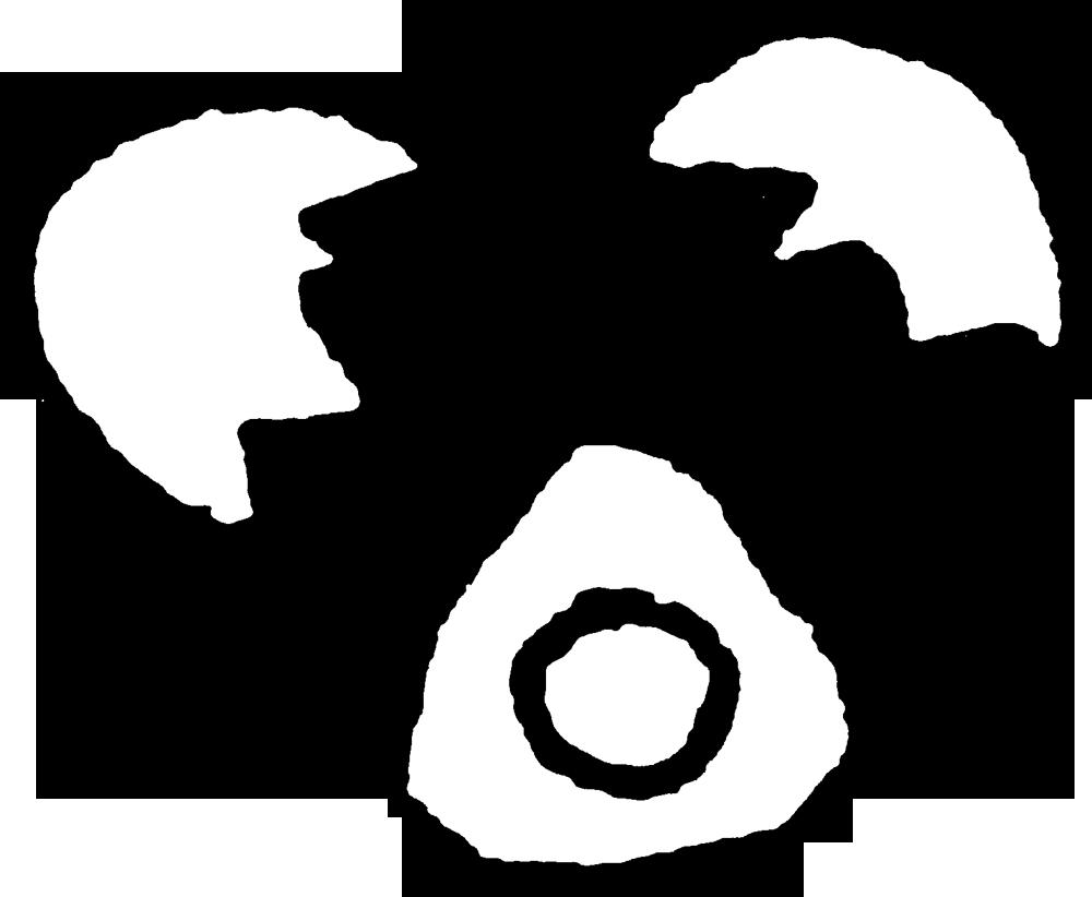 卵の殻と卵黄・卵白_egg
