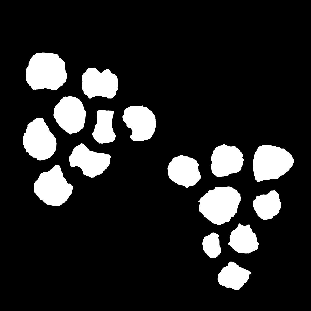 ぶどうのイラスト Grape  Illustration